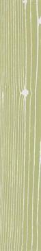 The White Positive Verde 1 120x20 rett.