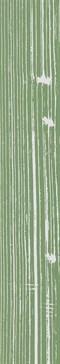 The White Positive Verde 2 120x20 rett.